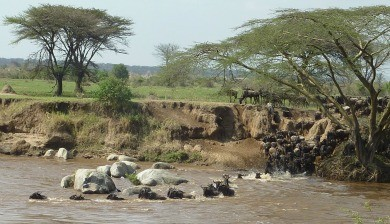 migration spectacle river serengeti tanzania