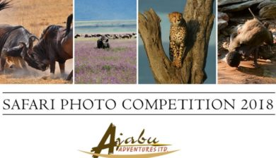 Join the Safari Photo Competition with Ajabu Adventures