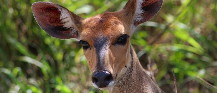 Impala and other wildlife in Arusha National Park
